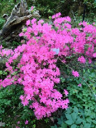 Botanical Garden: flowers
