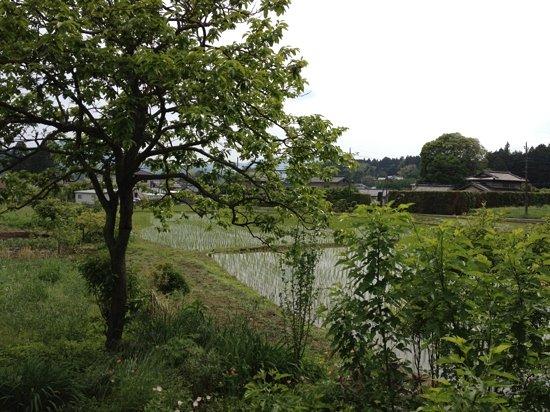 Nagomi: 窓からの景色