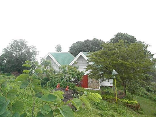 أمبادي إستيت: Ambady estate, munnar