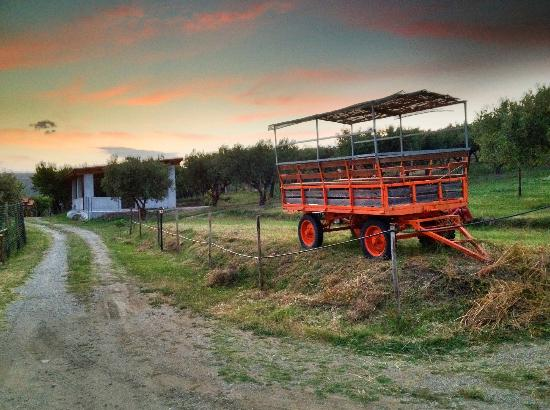Agriturismo Santacinnara: Walk around the farm