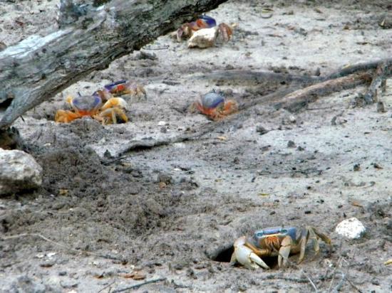 Vida Silvestre : Cangrejos