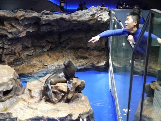 オットセイ3 - Picture of Sumida Aquarium, Sumida - TripAdvisor