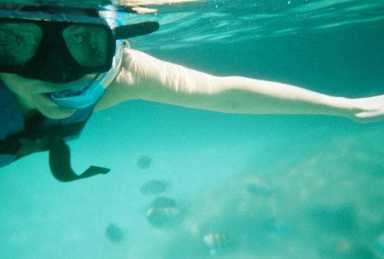 snorkeling-you can see fish below - Picture of Xel-Ha ...