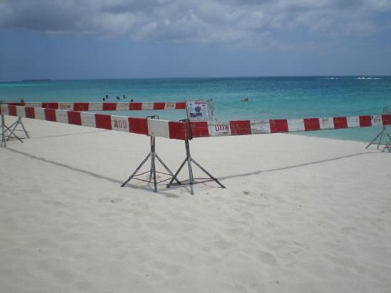 Eagle Beach: nido tartarughe segnalato