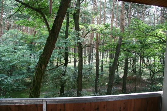 "Touristenstation Ferchland ""Haus Kiefernblick"": View from balcony"