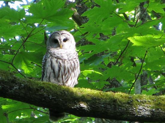 Discovery Park: Saw an owl