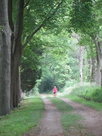 Hingham, MA: A jogger on a carriage path