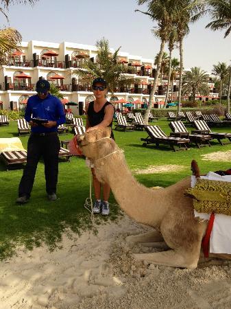 JA Palm Tree Court: Camel Riding