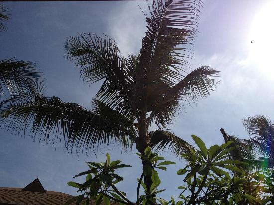 Landscape - Excellence Punta Cana: !
