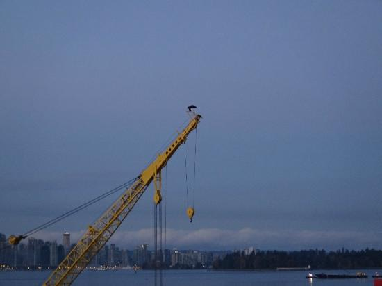 Pinnacle Hotel At The Pier : View from room Eagles pair on crane