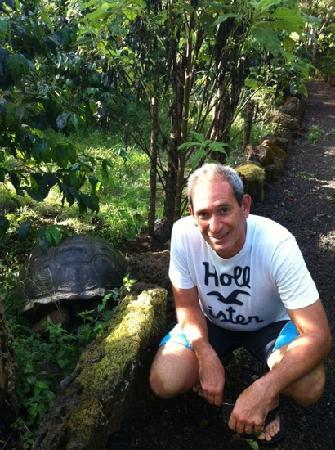 Semilla Verde Boutique Hotel: tortuga en su hábitat natural en la propiedad del hotel