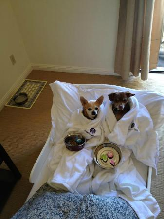 Seal Cove Inn: Pet Friendly Indeed!