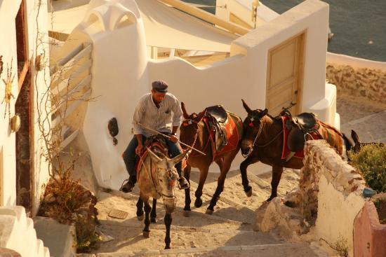 Lucky Homes - Oia: The donkeys at Oia