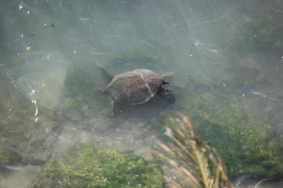 Royal Kahana: View of turtle from our room