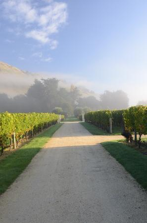 Craggy Range Vineyard Cottage: View from front door of cottage in the morning