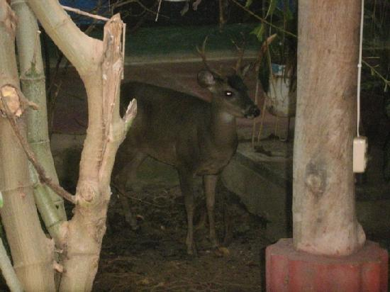 Hospedaje Central: Deer inside the hostel