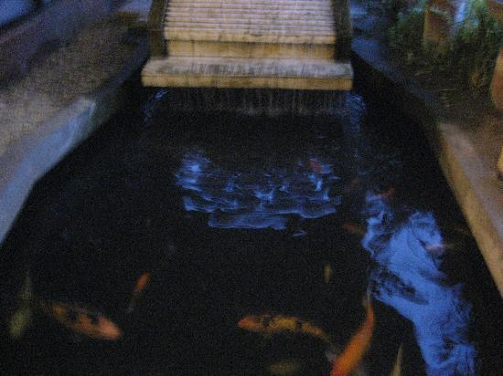 MO2 Westown Hotel-Mandalagan: Fish pond outside entrance full of Koh fish