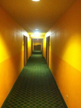Super 8 Indianapolis: hotel hallway- the REAL color of the hotel common areas