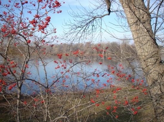Lake of the Isles : The lake in fall.