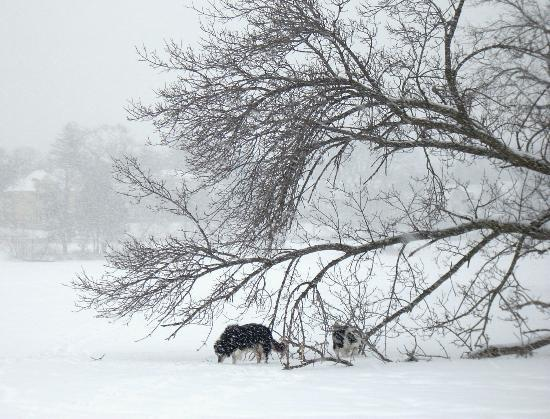 Lake of the Isles: My border collie checks out a fallen tree on the larger island.