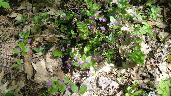 Ahern State Park : Some flowers in the woods