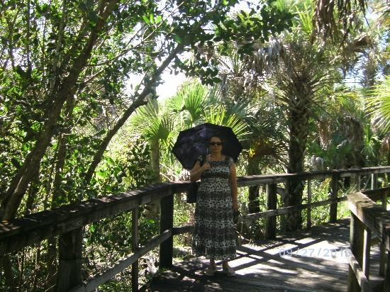 Alligator Creek Preserve: beautiful walk ways