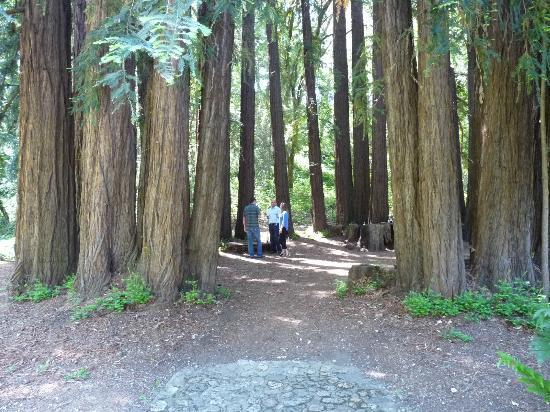 Redwood Circle Picture Of Reverie Winery Calistoga