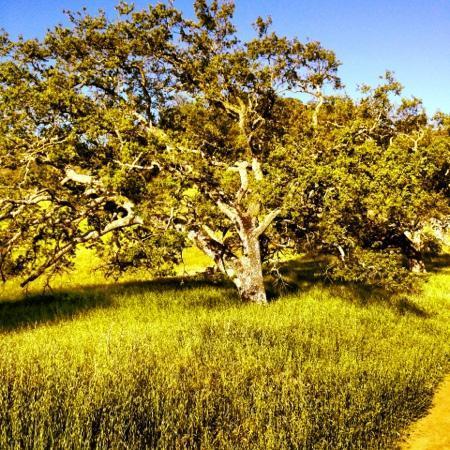 Almaden Quicksilver County Park: BEAUTIFUL!