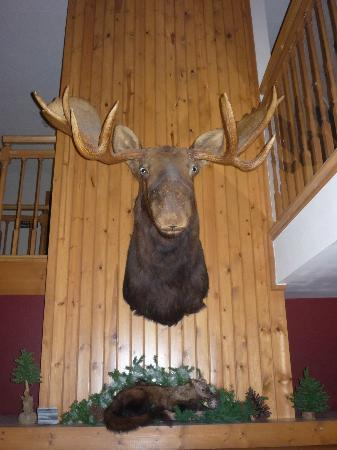 Hoyt Lakes, Μινεσότα: Mr Moose will always greet you when you enter the hotel.