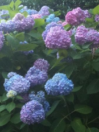 Greenville, SC: beautiful flowers