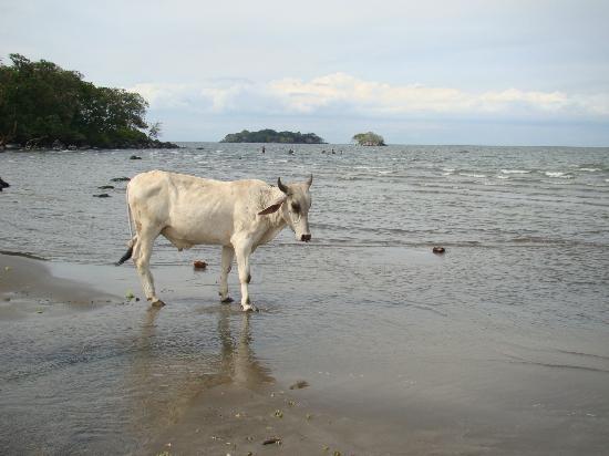 Finca San Juan de la Isla: Beach of Lake Nicaragua