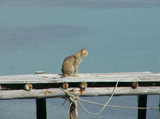 Akrogiali Rooms : Another cat