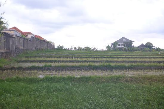 Bali Nyuh Gading Villa: Next to the Rice Fields