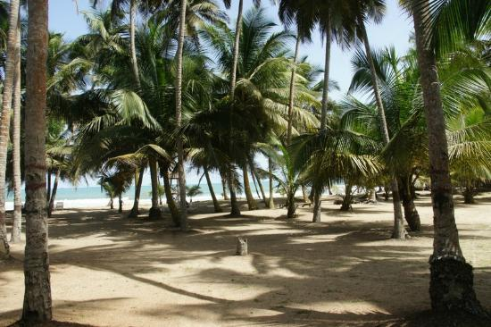 Sisimbo Beach Resort: Shadesof coconut trees