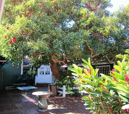Market Fresh Bistro: Under the Coral Tree in the courtyard