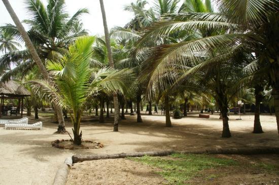 Kuntul, Ghana: Coconut Groves