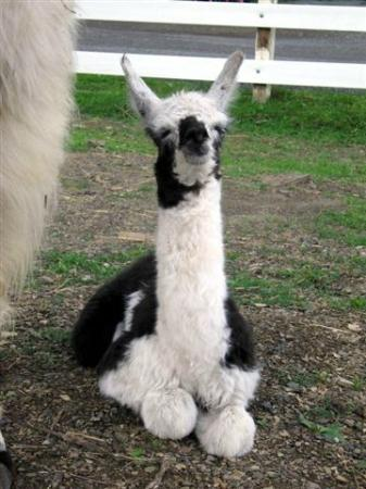 Dakota Ridge Farm: Cria