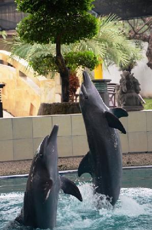 Melka Excelsior Dolphin & Wildlife Resort照片