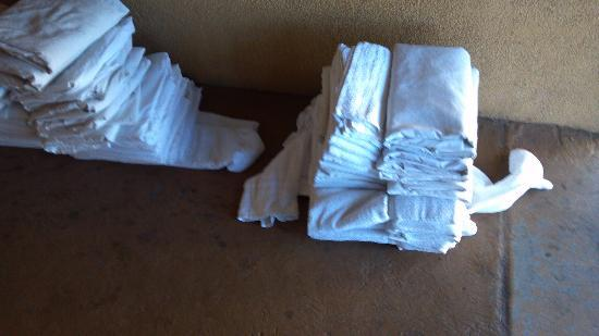 Ramada Flagstaff East: Clean sheets on the ground outside!!