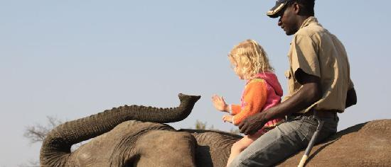 Adventures with Elephants: Interaction