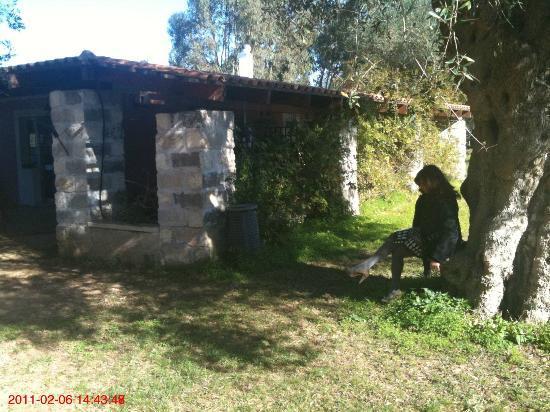 Scalilla - L'Agriturismo : Zona relax (prima colazione)