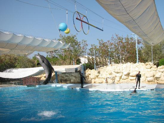 Royal Albatros Moderna Sharm el-Sheikh: Dolphinarium