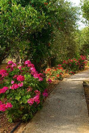 Mirabella Apartments: Garden