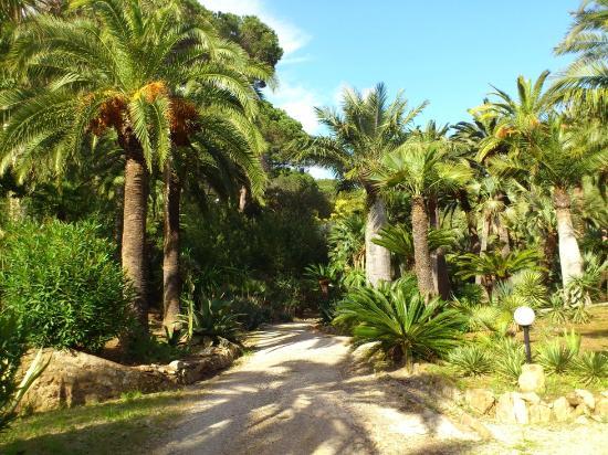 Camping Village Rosselba le Palme: Il giardino botanico