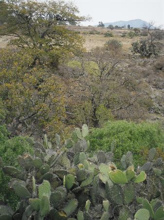 Rancho Las Cascadas Riding Tours : The nature