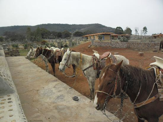 Rancho Las Cascadas Riding Tours : The nice horses