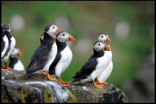 Scottish Seabird Centre: Puffins on the Isle of May