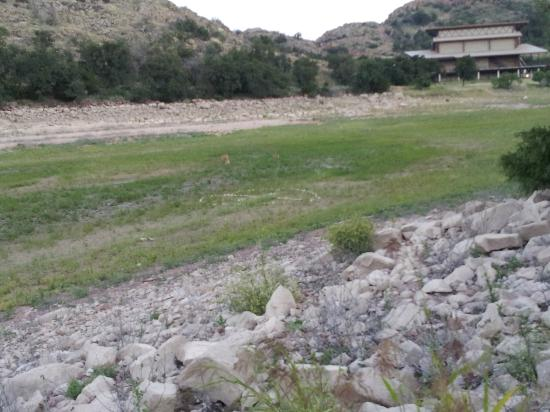 Quartz Mountain Resort Arts & Conference Center: Deer frequently walk through area at dusk