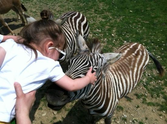 Rolling Ridge Ranch: Petting the Zebra