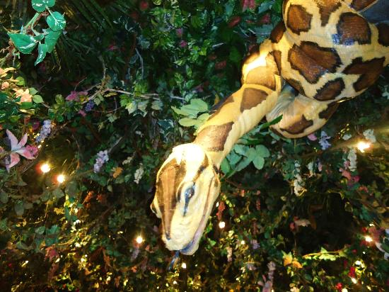 Rainforest Cafe Anaheim Hours